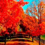 INSPIRATION PINSPIRATION #22 ~ Welcome Fall!